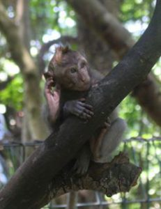Girls Who Travel | A brown monkey peeks over a round tree branch he's hugging