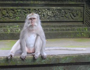 Girls Who Travel | A white-colored monkey sits on the step of a temple-style building