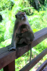 Girls Who Travel | A monkey and her baby sit on a ledge